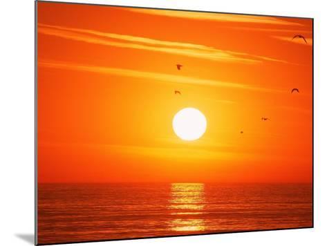 Birds Flying at Sunset, Playa Del Rey, CA-Harvey Schwartz-Mounted Photographic Print