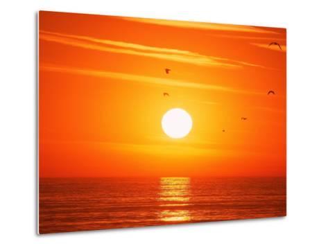 Birds Flying at Sunset, Playa Del Rey, CA-Harvey Schwartz-Metal Print