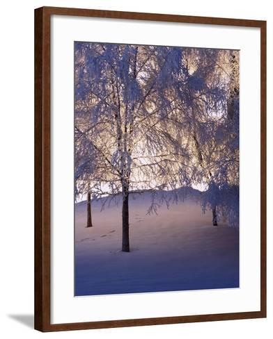 Snowy Light Trees, Anchorage, Alaska-Mike Robinson-Framed Art Print