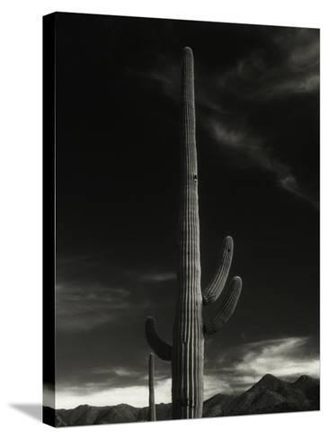 Cactus in Capitol Reef National Park, Utah-David Wasserman-Stretched Canvas Print