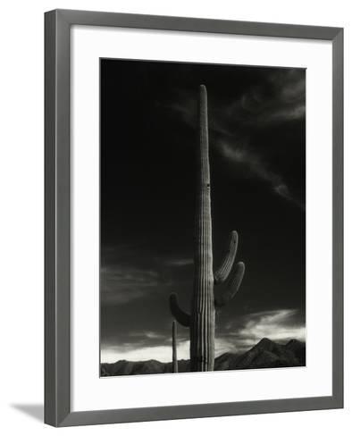 Cactus in Capitol Reef National Park, Utah-David Wasserman-Framed Art Print