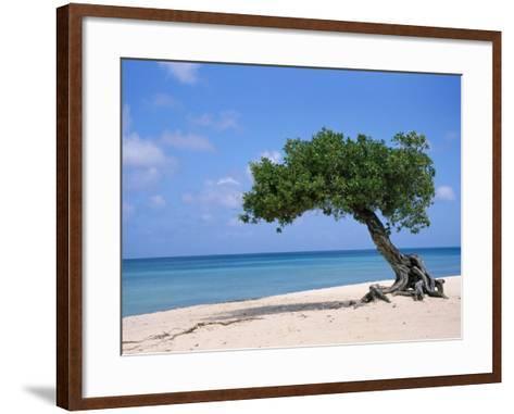 Divi Tree, Aruba-Jennifer Broadus-Framed Art Print
