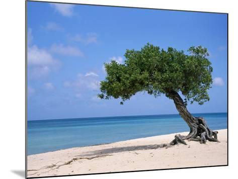 Divi Tree, Aruba-Jennifer Broadus-Mounted Photographic Print