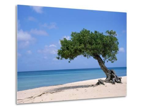 Divi Tree, Aruba-Jennifer Broadus-Metal Print