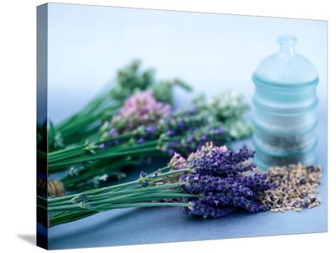 Cut Lavender, Dried Lavender & Glass Pot-Lynn Keddie-Stretched Canvas Print