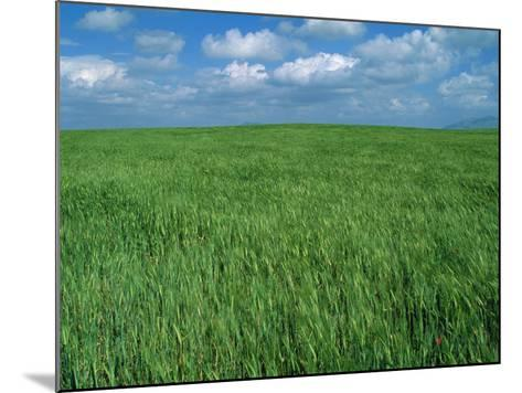 Wheat Fields Near Antequera, Spain-Gary Conner-Mounted Photographic Print