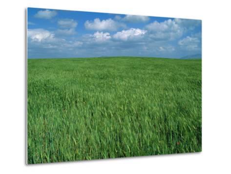 Wheat Fields Near Antequera, Spain-Gary Conner-Metal Print