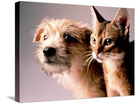 Cat and Dog-Daniel Fort-Stretched Canvas Print