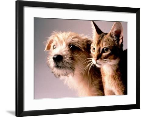 Cat and Dog-Daniel Fort-Framed Art Print