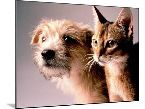Cat and Dog-Daniel Fort-Mounted Photographic Print