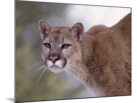 Puma-Ernest Manewal-Mounted Photographic Print