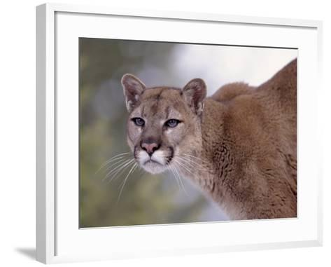 Puma-Ernest Manewal-Framed Art Print