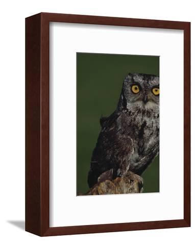 Screech Owl-Russell Burden-Framed Art Print