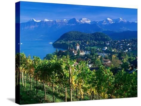 Castle and Vines, Spiez, Switzerland-Peter Adams-Stretched Canvas Print