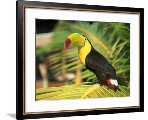 Parrot in Bird Park, Bay Islands, Hd-Tom Stillo-Framed Art Print