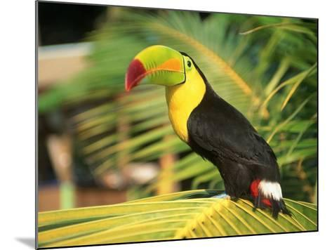 Parrot in Bird Park, Bay Islands, Hd-Tom Stillo-Mounted Photographic Print