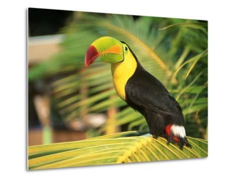 Parrot in Bird Park, Bay Islands, Hd-Tom Stillo-Metal Print