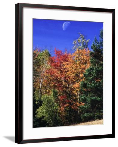 Autumn Trees with Moon, Vermont-Russell Burden-Framed Art Print