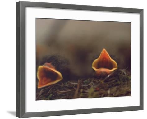 Birds, Newborn Phoebe-Lauree Feldman-Framed Art Print