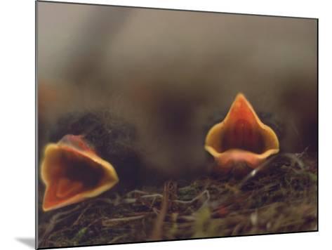 Birds, Newborn Phoebe-Lauree Feldman-Mounted Photographic Print