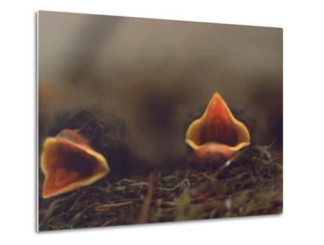 Birds, Newborn Phoebe-Lauree Feldman-Metal Print