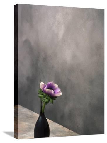 Pink Anemone in Vase-David Wasserman-Stretched Canvas Print