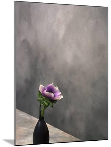 Pink Anemone in Vase-David Wasserman-Mounted Photographic Print