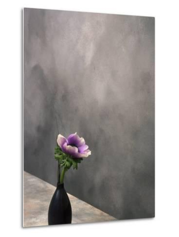 Pink Anemone in Vase-David Wasserman-Metal Print