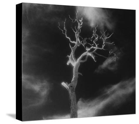 Gnarled Tree, County Offaly, Ireland-Simon Marsden-Stretched Canvas Print