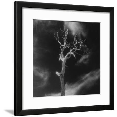 Gnarled Tree, County Offaly, Ireland-Simon Marsden-Framed Art Print