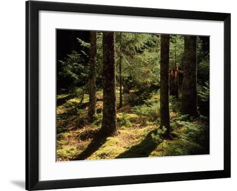 Moss Spruce Trees, Acadia National Park, ME-Eric Horan-Framed Art Print