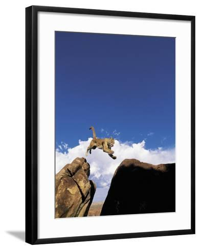 Mountain Lion Leaping, Southwest US-Amy And Chuck Wiley/wales-Framed Art Print