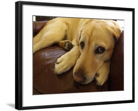 Dog Lying Down-Bruce Ando-Framed Art Print