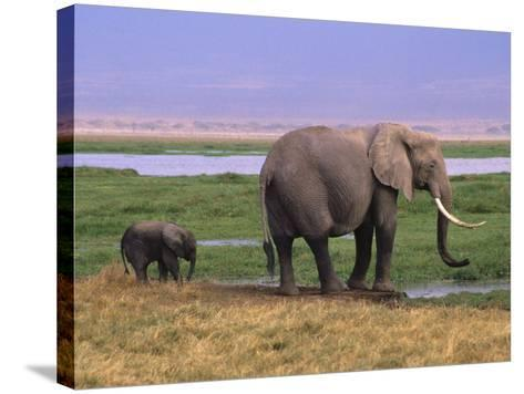 Kenya, Amboseli National Park, Elephant with Offspring-Michele Burgess-Stretched Canvas Print