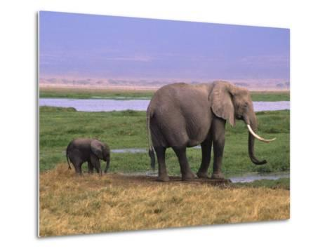 Kenya, Amboseli National Park, Elephant with Offspring-Michele Burgess-Metal Print