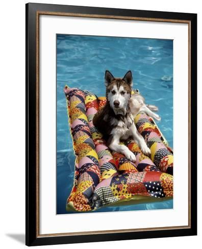 Dog Floating on Raft in Swimming Pool-Chris Minerva-Framed Art Print