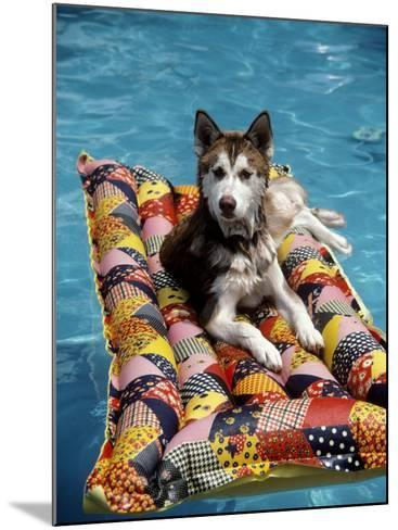 Dog Floating on Raft in Swimming Pool-Chris Minerva-Mounted Photographic Print