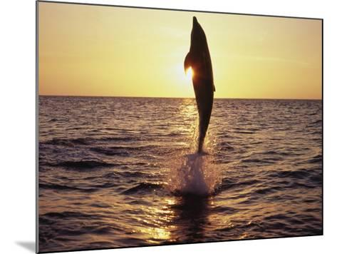 Dolphin Jumping from Water-Stuart Westmorland-Mounted Photographic Print