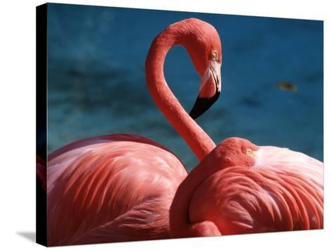 Pink Flamingos-Michele Burgess-Stretched Canvas Print