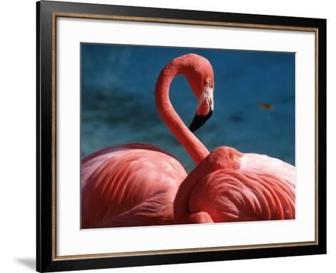 Pink Flamingos-Michele Burgess-Framed Art Print