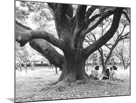 Family Picnic Under Cherry Blossoms, Japan-Walter Bibikow-Mounted Photographic Print