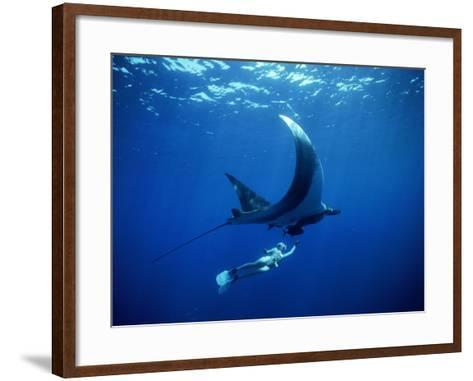 Diver Swims with Giant Manta Ray, Mexico-Jeffrey Rotman-Framed Art Print