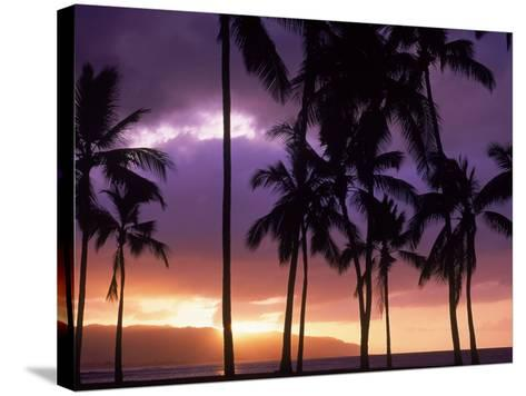 Silhouette of Palm Trees, Hawaii-Mitch Diamond-Stretched Canvas Print