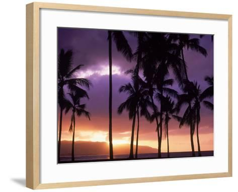 Silhouette of Palm Trees, Hawaii-Mitch Diamond-Framed Art Print