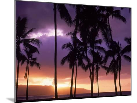 Silhouette of Palm Trees, Hawaii-Mitch Diamond-Mounted Photographic Print