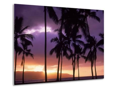 Silhouette of Palm Trees, Hawaii-Mitch Diamond-Metal Print