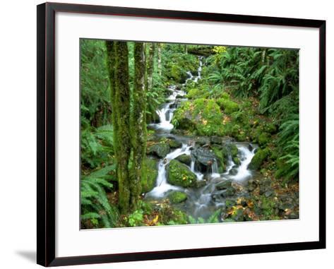 Waterfall at Mt. Rainer Rain Forest-Charles Benes-Framed Art Print
