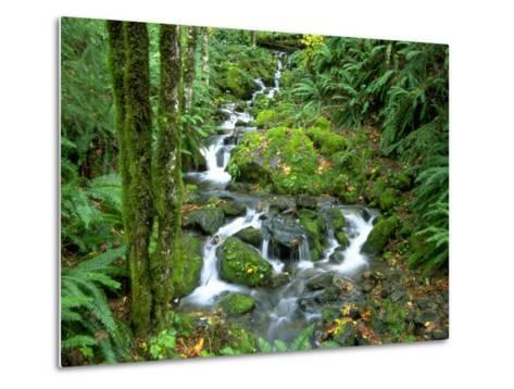 Waterfall at Mt. Rainer Rain Forest-Charles Benes-Metal Print