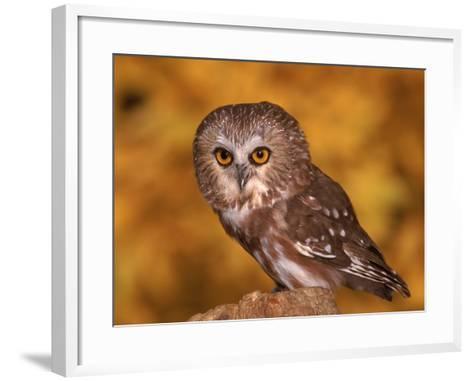 Saw-Whet Owl on Tree Stump-Russell Burden-Framed Art Print