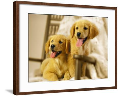 Two Golden Retriever Puppies Sitting in Chair-Jon Riley-Framed Art Print